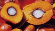 WE SELL PALM OIL IN LARGE AND SMALL QUANTITIES